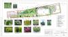 Разработка дизайна участка в Парголово